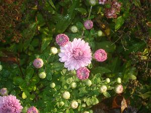 Autumn_delights3