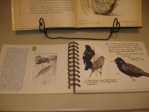 Bird_notebook2