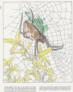 Bws_spider