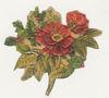 Christmas_rose