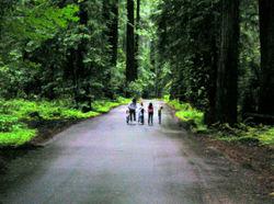 Ericas_redwoods_2