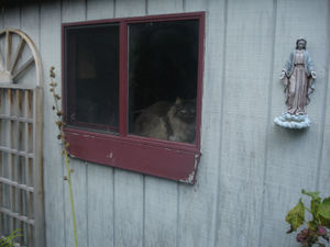 Fluffy_in_shed