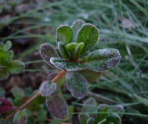 Frost1