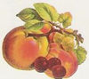 Fruit_sticker4