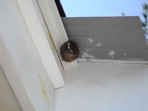 Hornet_nest_remnants