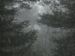 Late_winter3