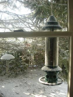 Late_winter5
