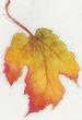 Leaf4_1