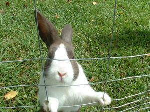 Marcies_bunny
