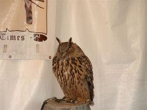 Marcies_owl