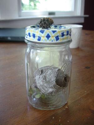 New_nest_in_jar