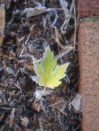 November_frost3