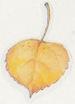 November_sticker9_1