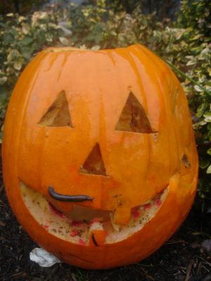 Slug_pumpkin