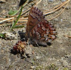 Tiny_butterfly_2