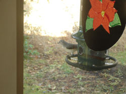 Titmouse_at_feeder_2