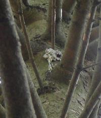 Tree_gunk_1