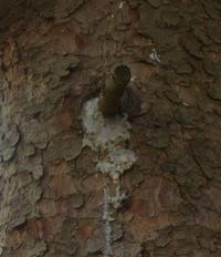 Tree_gunk_2