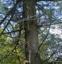 Tree_gunk_4