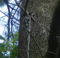 Tree_gunk_5