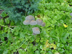 Mushrooms_among_greenery