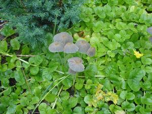 Mushrooms_among_greenery