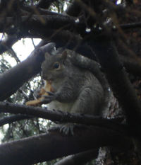 Squirrel_with_toast_1