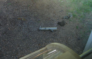 Squirrels_altogether