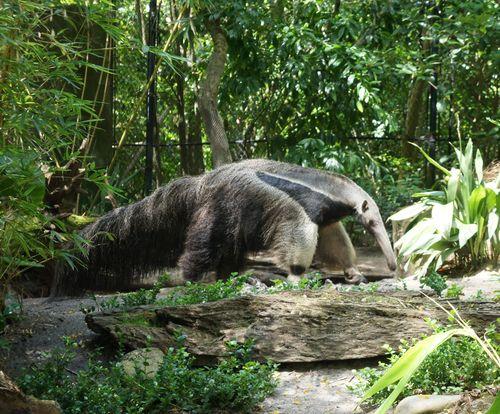 AntEater  Anteater Kingdom