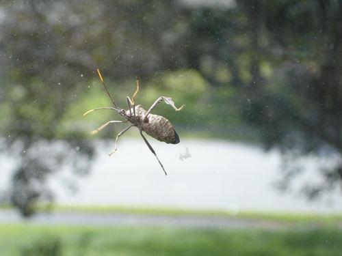 Strange_bug_on_window