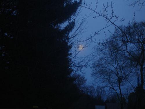 Full_pink_moon