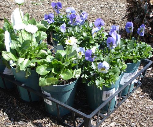 Spring_plants