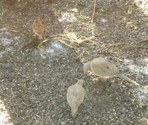 Doves & Sparrow